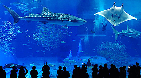 沖縄美ら海水族館 ホテルヤンバルニア